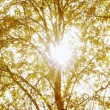 Vídeo de stock: Sunlight through trees