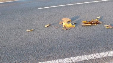 Cars driving on autumn leaves — Stock Video