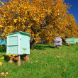 Honey bee hives — Stock Photo #33344985