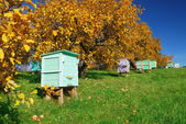 Honey bee hives — Stock Photo