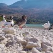 Stock Video: Family of geese resting on lake