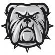 Bulldog head — Stock Vector