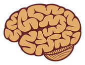The human brain — Stock Vector