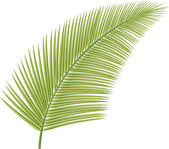 Palm leaf — Stock Vector