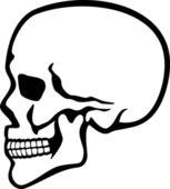 Human skull profile — Stock Vector