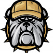 Bulldog head and baseball cap — Stock Vector