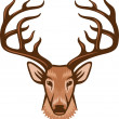 Stock Vector: deer head