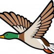 Stock Vector: Mallard duck flying