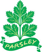 Illustration parsley — Stock Vector