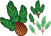 Branch of pine and pine cone — Stockvector