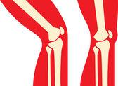 Knee anatomy — Stock Vector
