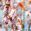Stock Photo: Close up of spring flowers