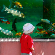 Young boy looking at fishes in big aquarium — Stock Photo