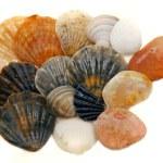 Seashells over white — Stock Photo #12607176