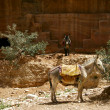 Donkeys in desert - Stockfoto