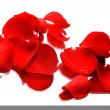 Rose petals with reflection isolated over white — Stock Photo