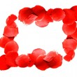 Border from red rose petals over white - Stock Photo