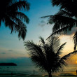 Sunset in tropics — Stock Photo