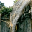 Tha Prohm, Angkor, Cambodia - Stock Photo