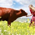 Happy girl feeding cow on meadow — Stock Photo #12608903