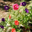 Red and purple flowers — Stock Photo
