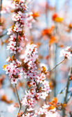 Close up of spring flowers — Stock Photo