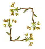 Frame of tree branch with new leaves over white — Stock Photo