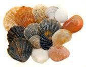 Seashells over white — Stock Photo
