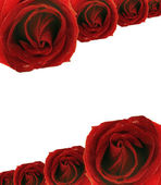 Blank postcard with red rose frame — Stock Photo