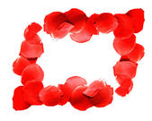 Border from red rose petals over white — Stock Photo