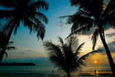 Solnedgång i tropikerna — Stockfoto