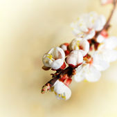 Spring flowers, shallow DOF — Stock Photo