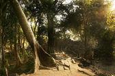 Ruinas camino al templo olvidado en selva — Foto de Stock