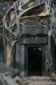 Tha Prohm, Angkor, Cambodia — Photo
