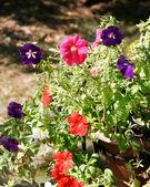 Rode en paarse bloemen — Stockfoto