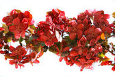 Branch of red flowers over white — Stock Photo