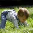 Stock Photo: Baby boy playing in green grass