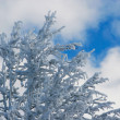 Winter tree covered with snow — Stock Photo