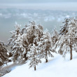 Winter forest — Stock Photo #12610457