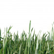 Green grass isolated over white - Stock Photo