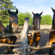 Horses on farm — Stock Photo