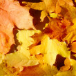 Background from autumn leaves — Foto de Stock