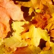 Foto de Stock  : Background from autumn leaves