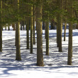 Tree shadows in winter forest - Stock Photo