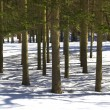 Royalty-Free Stock Photo: Tree shadows in winter forest