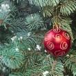 Xmas tree and red ball — Stock Photo
