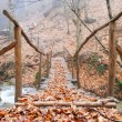 Wooden bridge in autumn forest - Stock Photo