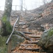 Wooden stairs in rainy forest — Stock Photo