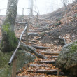 Wooden stairs in rainy forest - Stock Photo