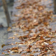 Yellow leaves on wooden bridge, shallow DOF - Foto Stock